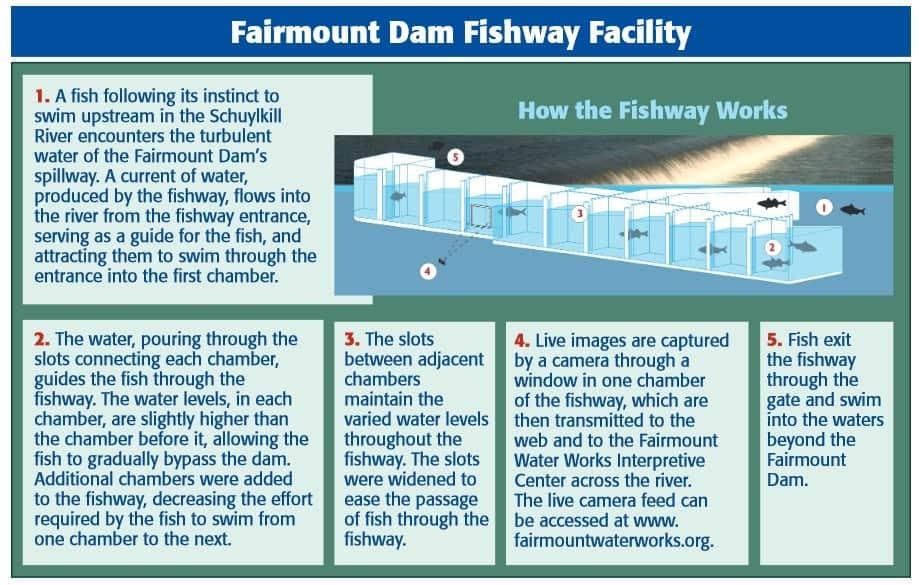 Fairmount Dam Fishway Facility