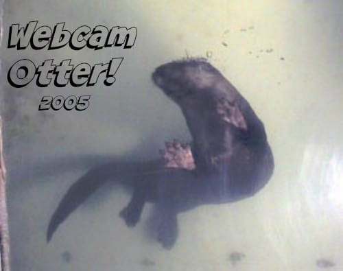 Otter from fishcam March 2005