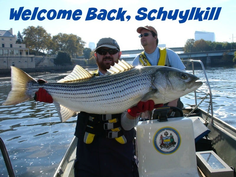 striped bass in schuylkill art museum area Welcome back