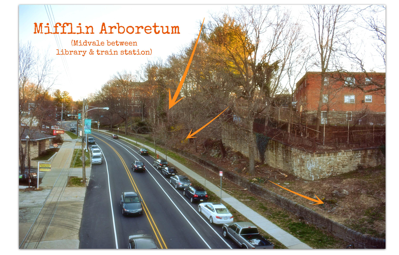 EastFallsLocal mifllin arboretum arrows text