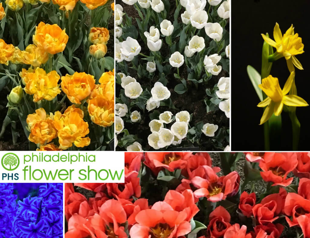 EastfallsLocal Phila Flower Show collage