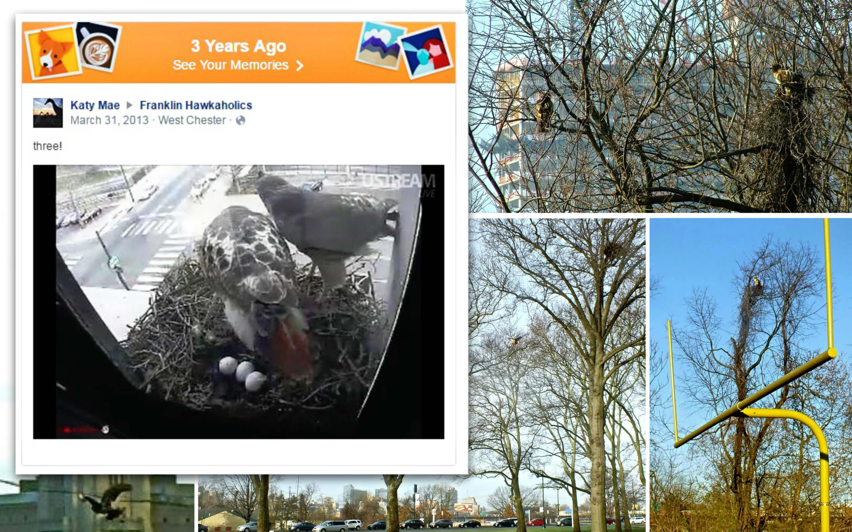Eastfallslocal collage timebop urban hawks