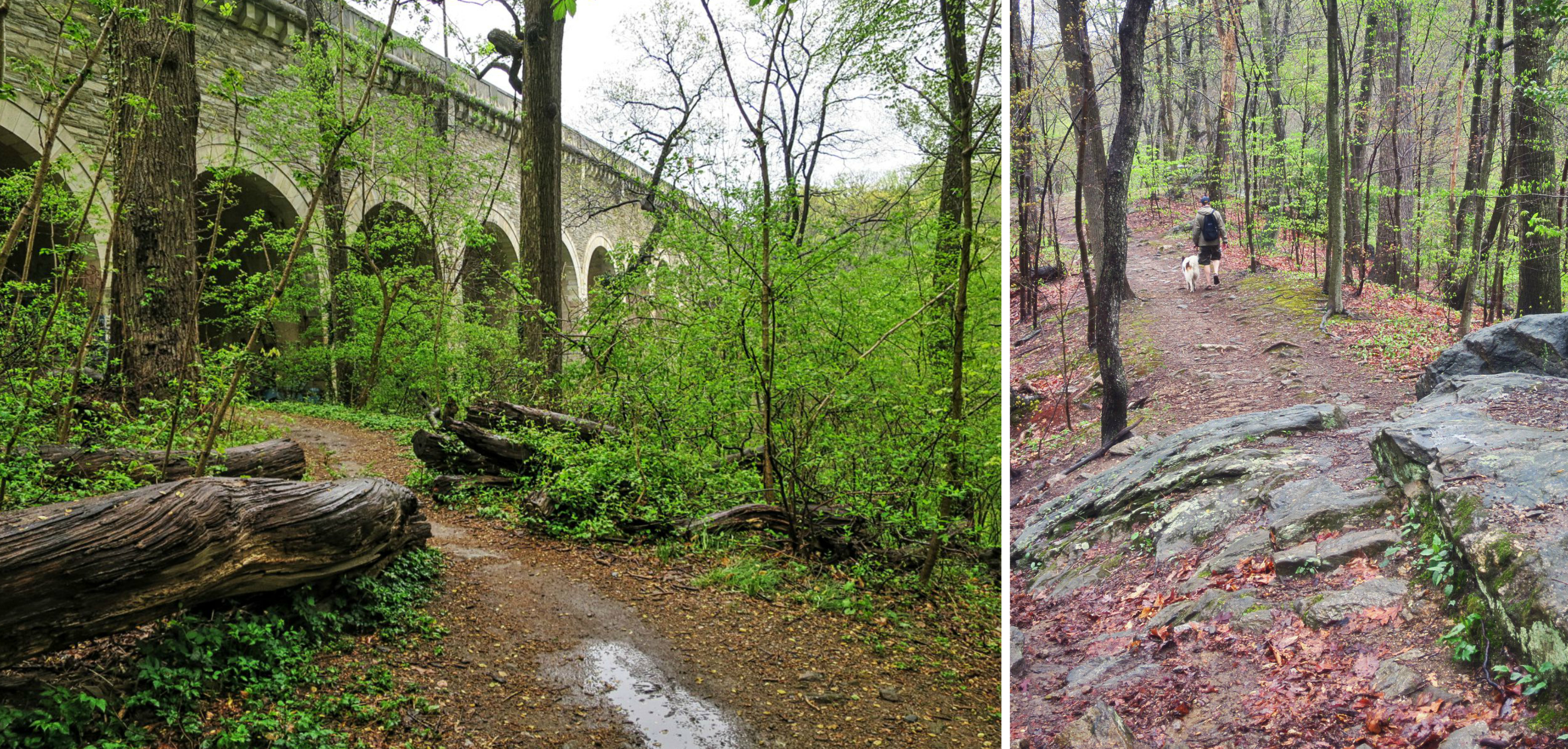 EastFallsLocal 4-23 Wissahickon collage