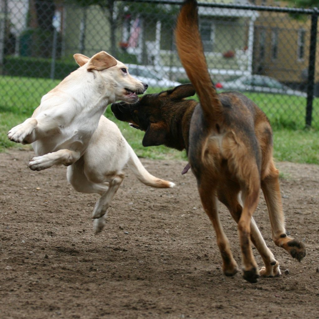 Dog Park Dangers