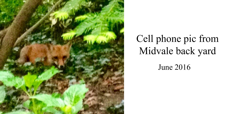 EastFallsLocal cell phone fox midvale yard