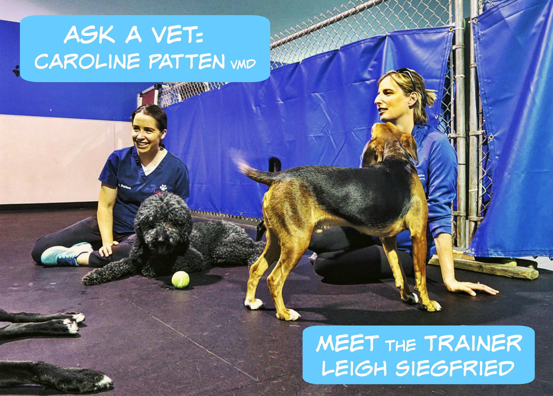 EastFallslocal Ask A Vet Meet the Trainer