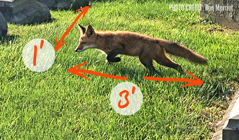 EastFallslocal fox body with notes
