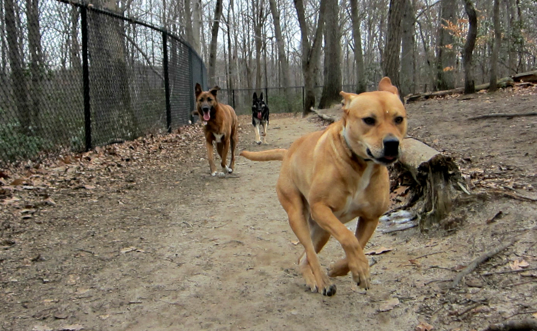 Breeze dog park