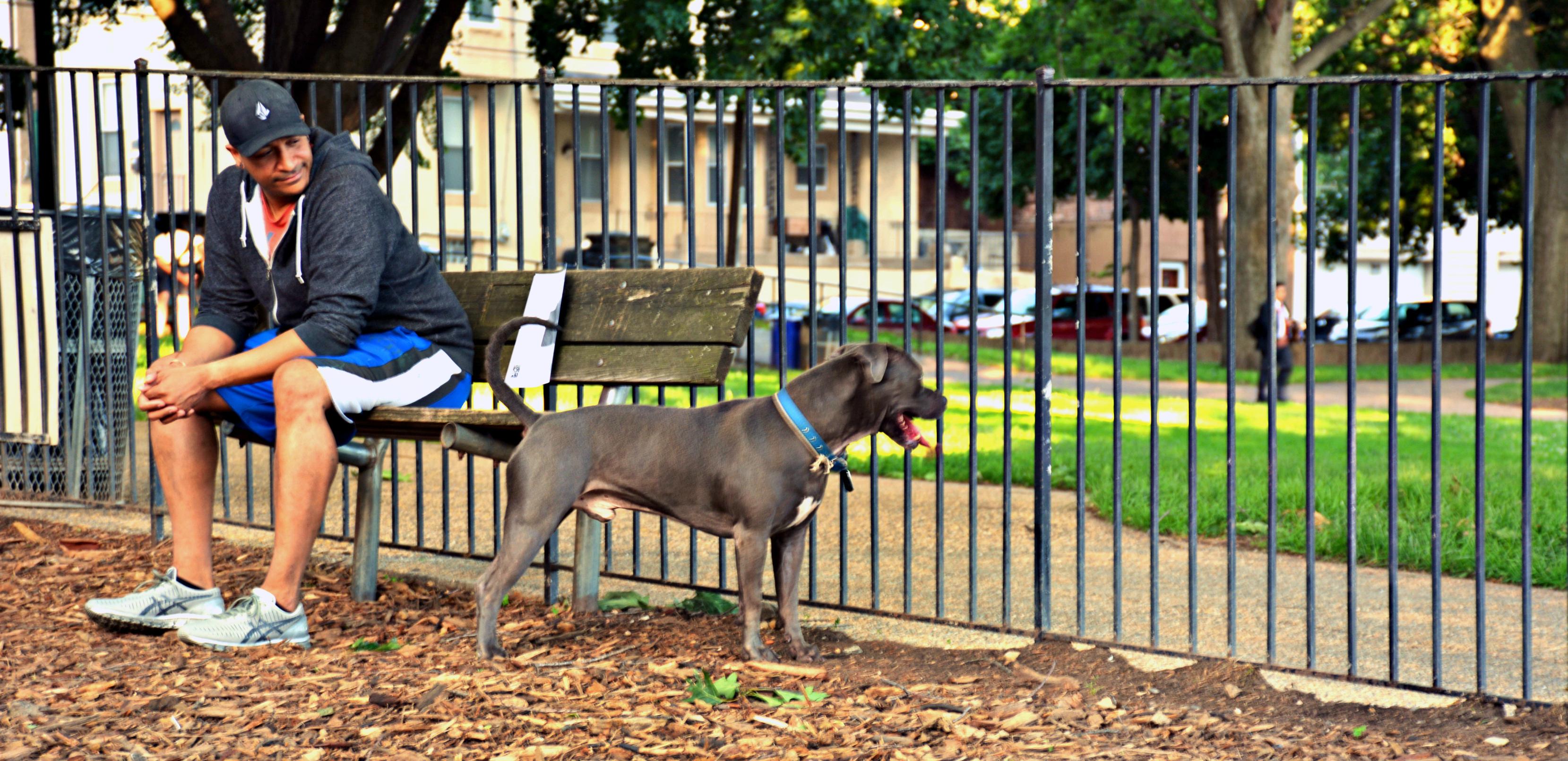 EastFallsLocal 6-9 pretzel park dog park crop