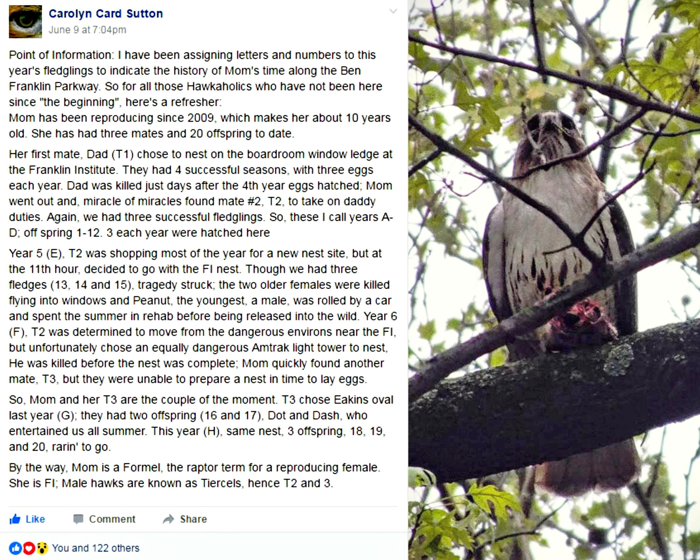 EastFallsLocal Hawk history collage