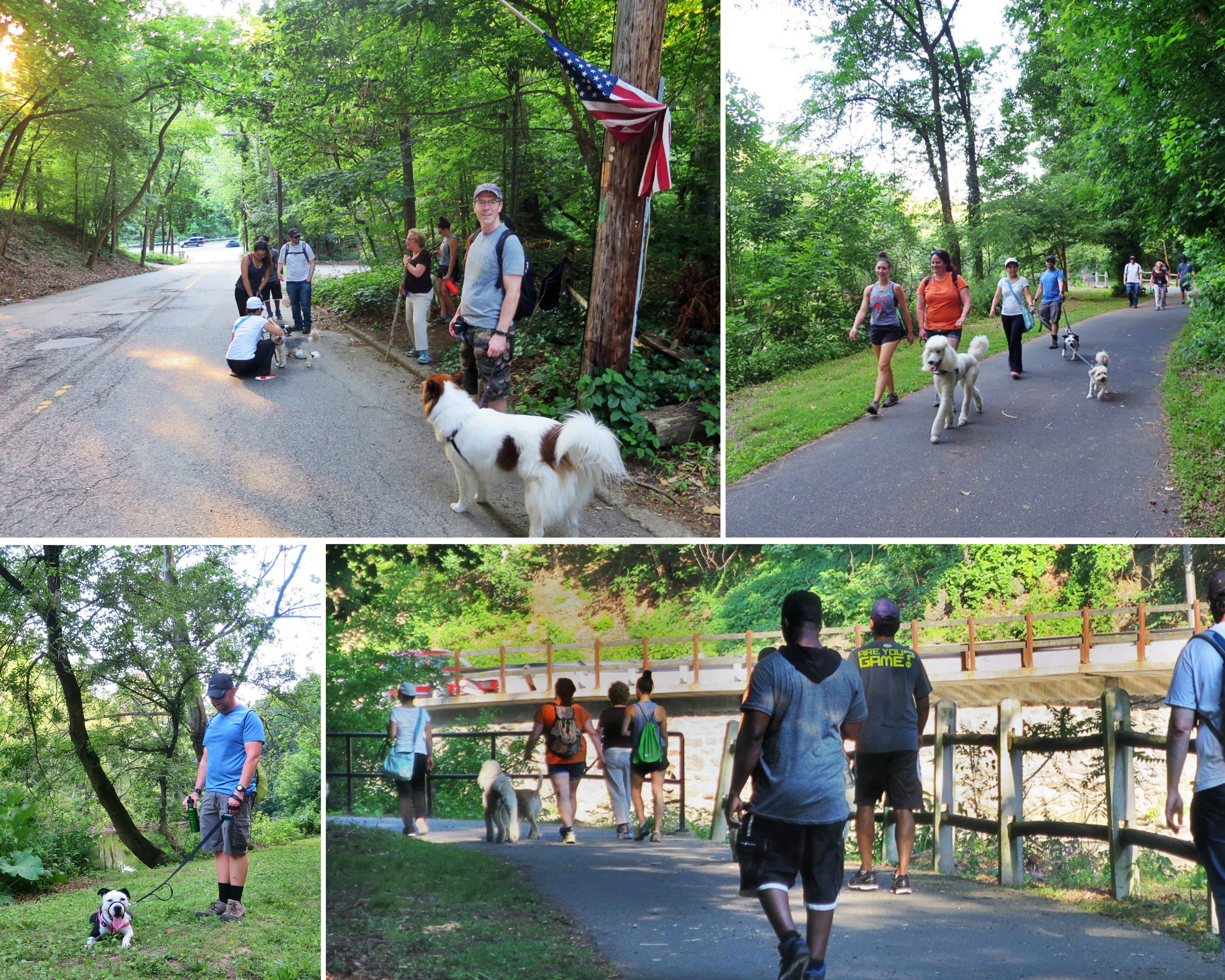EastFallsLocal collage dogs on pack walk