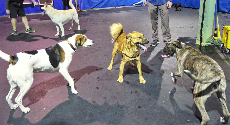 EastFallsLocal dogs for Leigh post crop