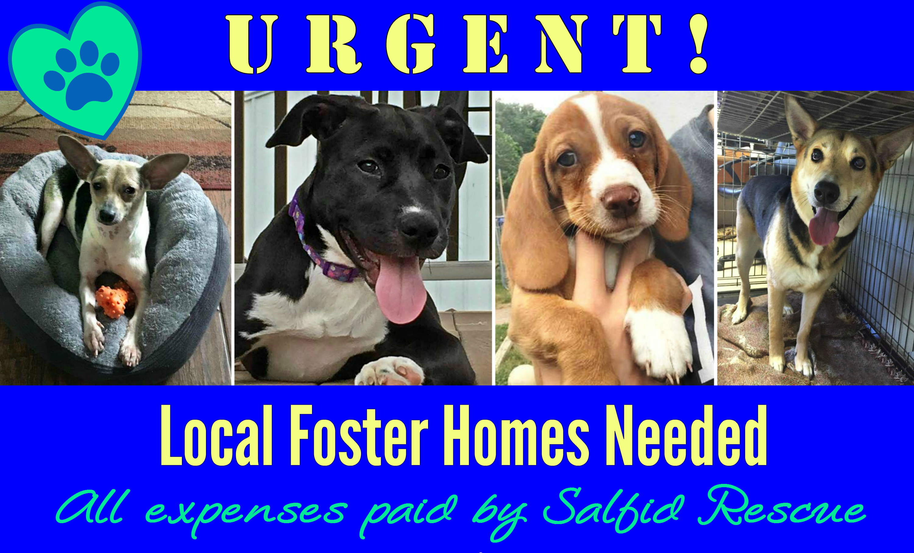 foster homes needed east falls local