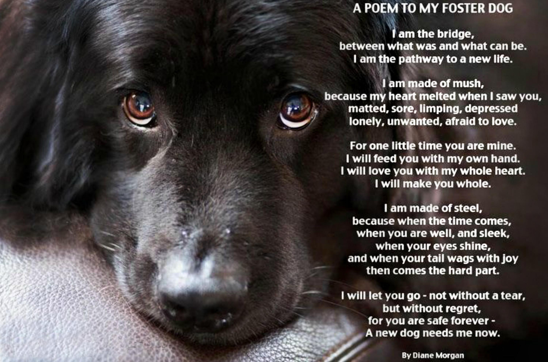 EastFallsLocal resize foster dog I am the bridge