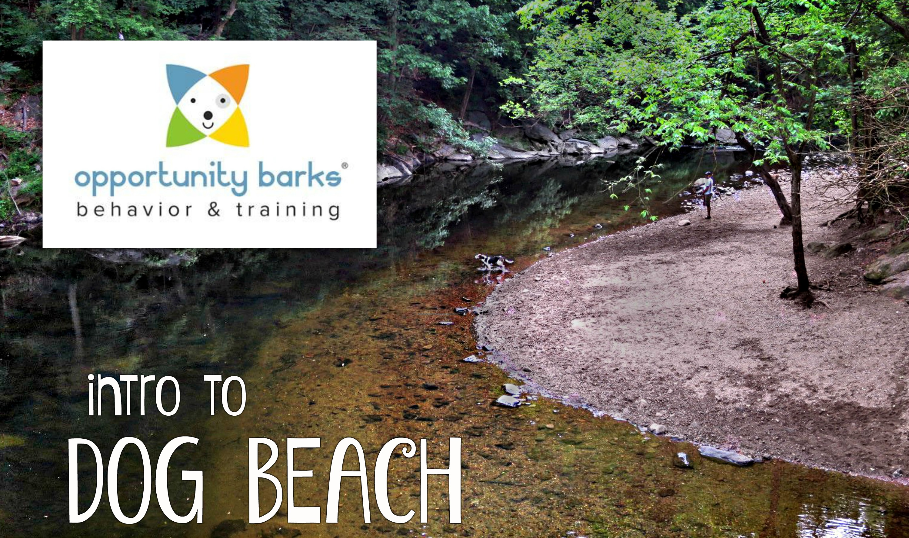 EastFallsLocal resize intro to dog beach Op Barks