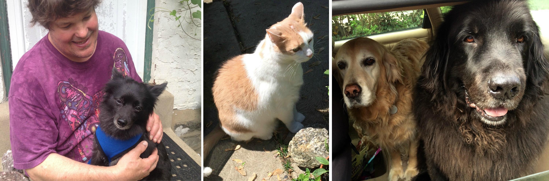 EastFallslocal pet collage 2