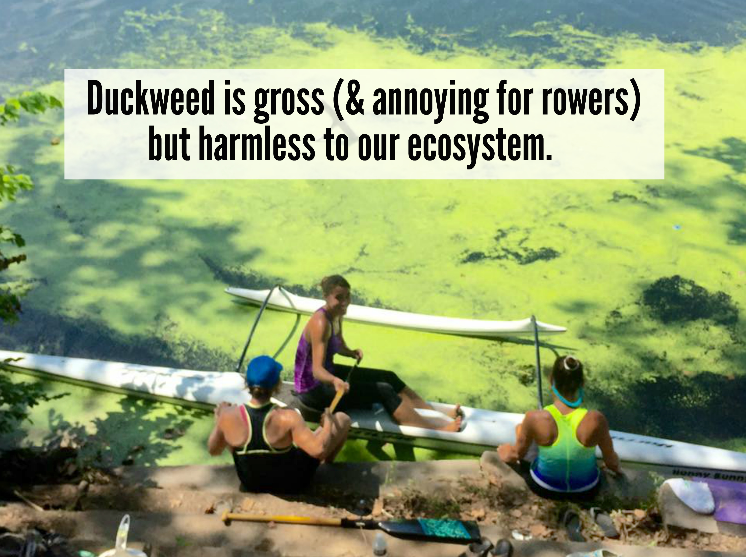 EastFallsLocal duckweed rowers text