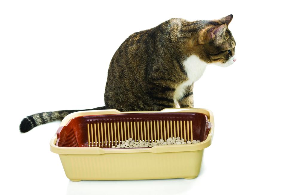 Eastfallslocal.Cat Litter Box