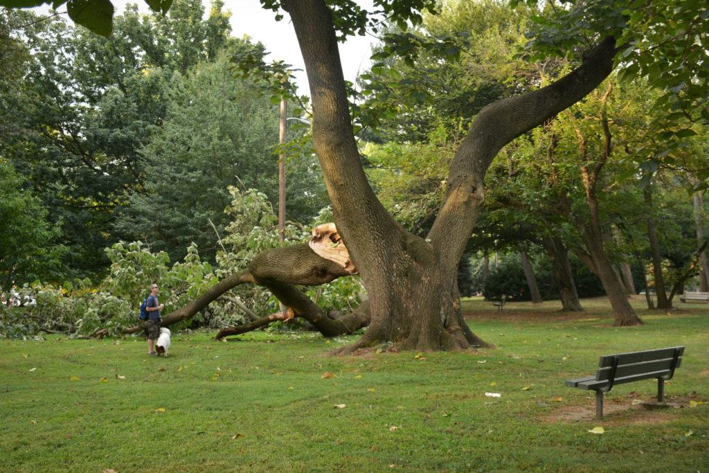 eastfallslocal-9-13-mcmichael-tree-down-survey-steve