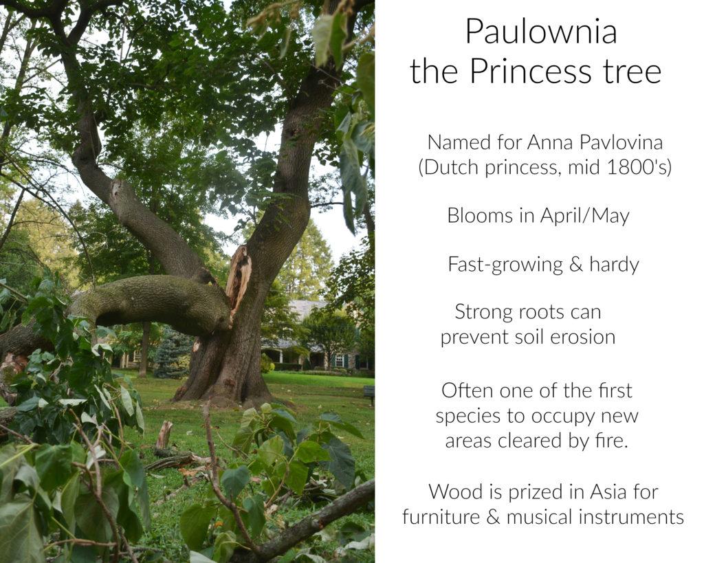eastfallslocal-collage-paulowania-tree-text