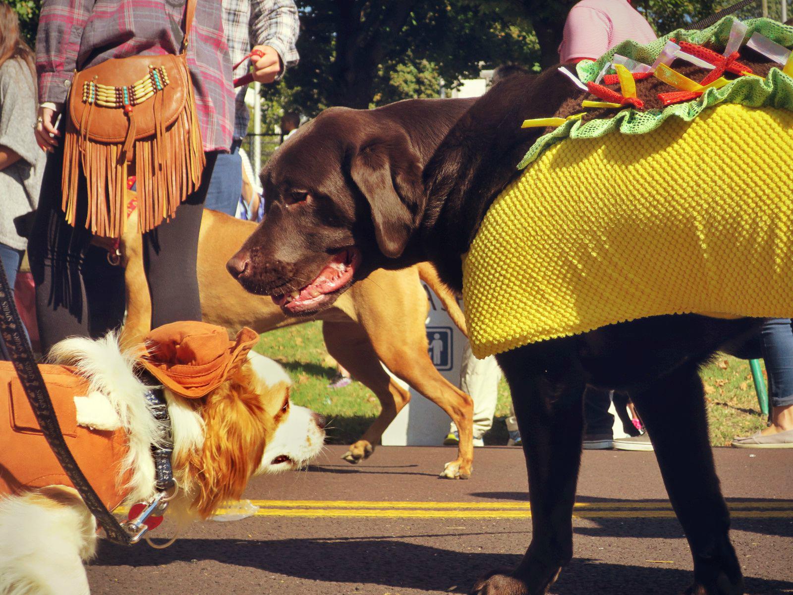 eastfallslocal-10-15-bc-costume-hot-dog-cow-boy