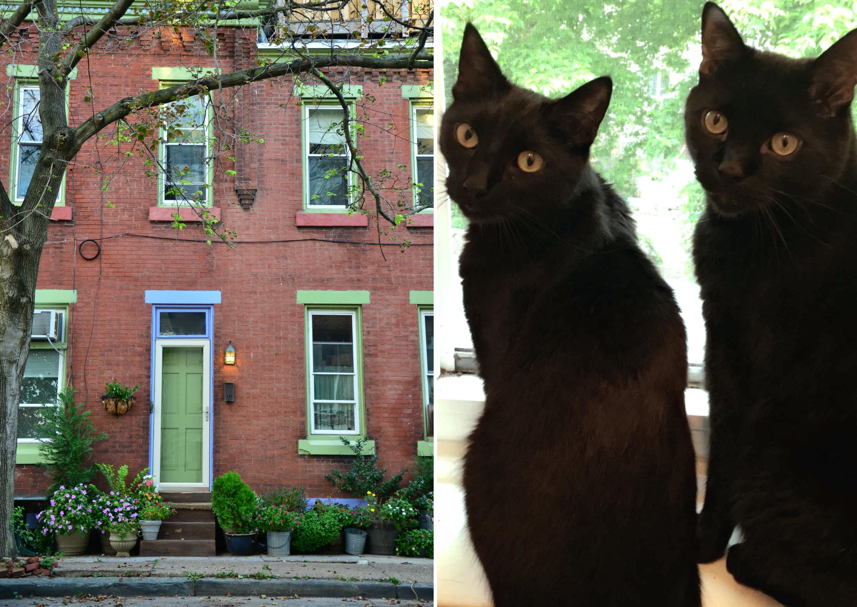 eastfallslocal-insta-collage-cats