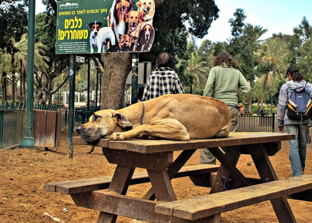 dog-park-diseases3-retouched-1