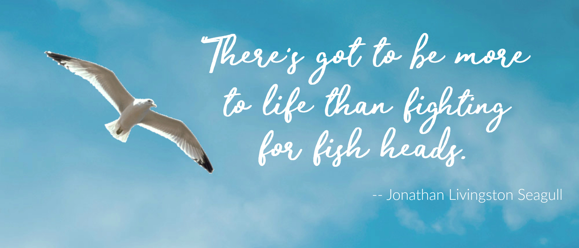 jonathon livingston seagull essay Jonathan livingston seagull overcame the hardship of learning to fly higher so he could get to his dream land i always have an english-chinese dictionary with me.